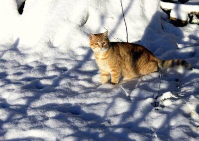 Gato sobre nieve