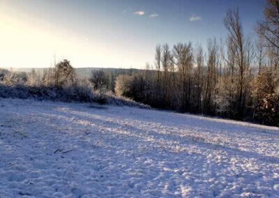 Noceda nevada